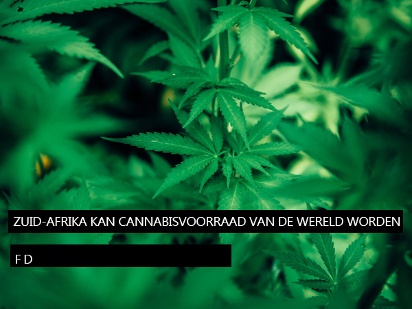 Zuid-Afrika kan cannabisvoorraadschuur van de wereld worden